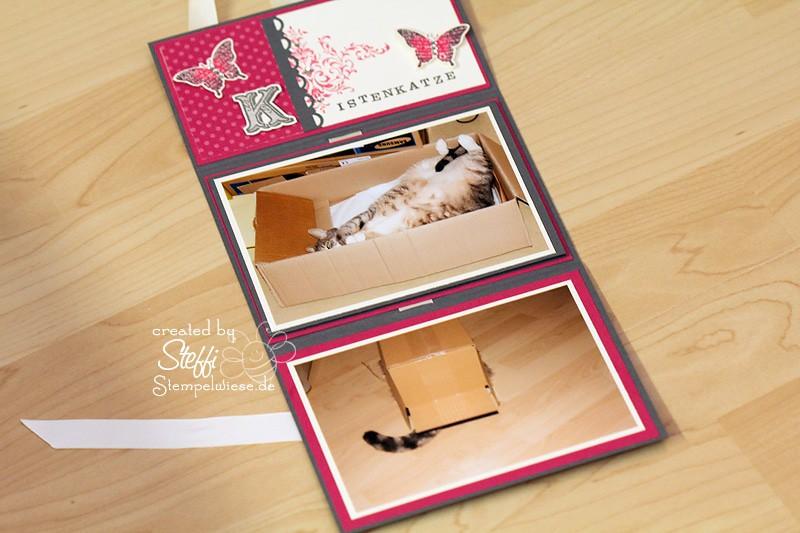 Mini Fotoalbum von Katze Tammy 4