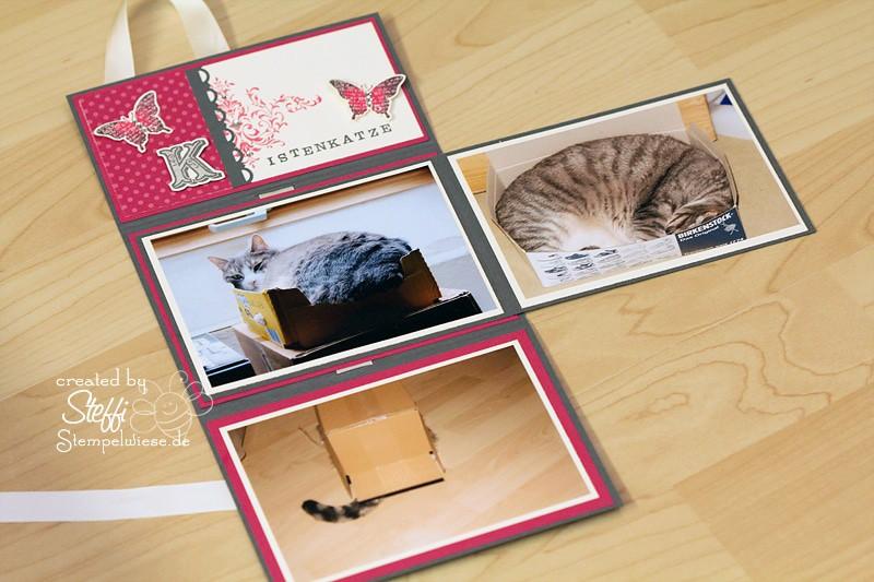 Mini Fotoalbum von Katze Tammy 5