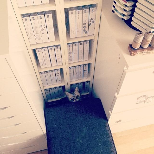 Neuer Schlafplatz #mimi #stempelwiese