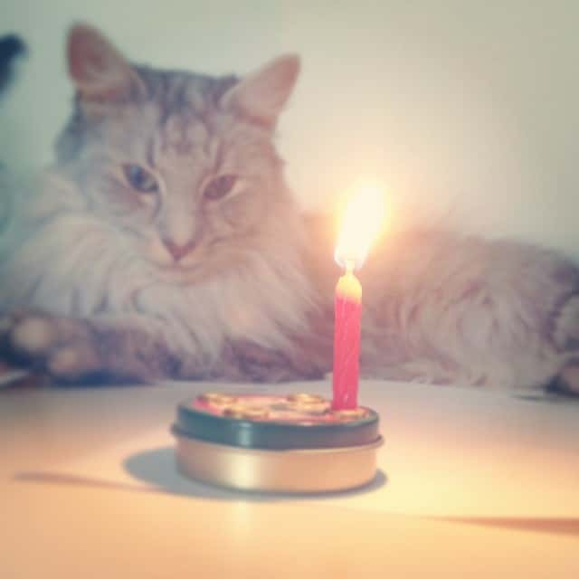 Happy Birthday <3 #rico #catcontent #stempelwiese