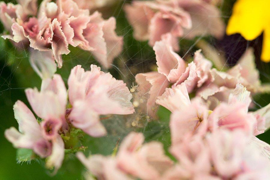 macro23-babyspinnen-nest