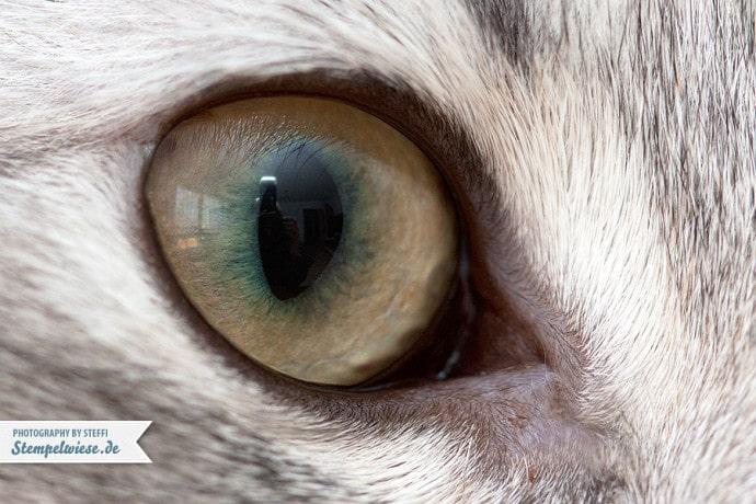 MakroMontag - Katzenauge ❤ Stempelwiese