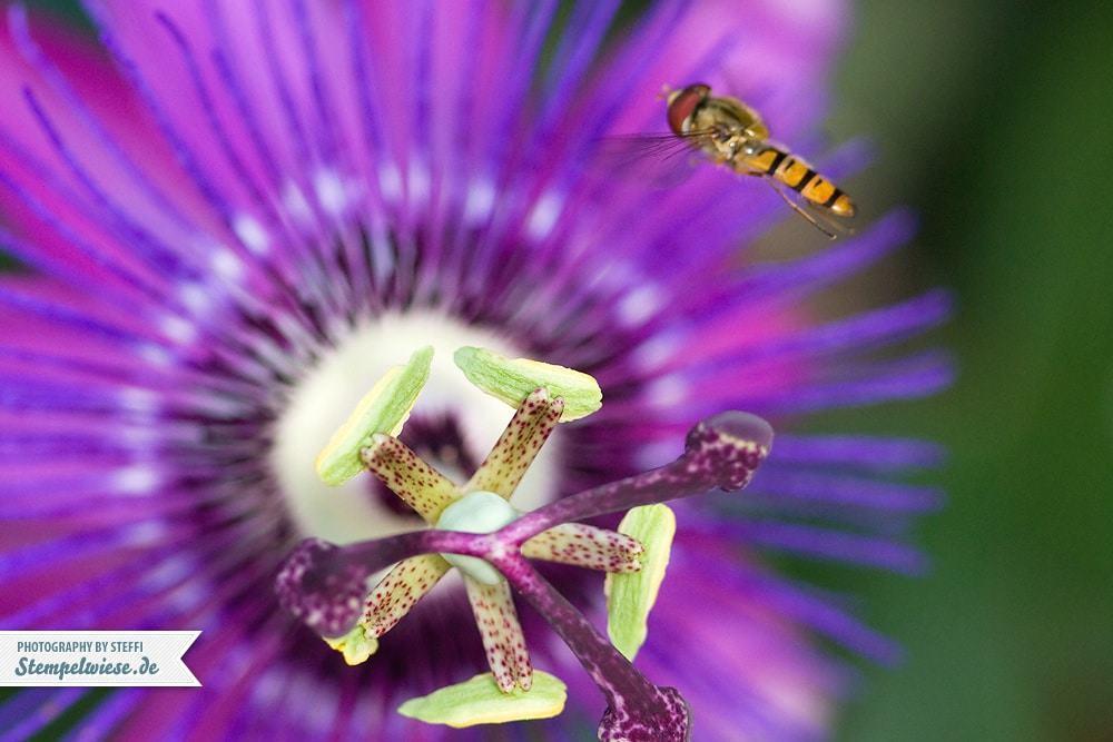 macro28-flower-07072014