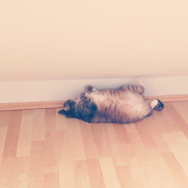 Ziehe Arm und Beine ein, könnt ich eine Murmel sein! #tammy #stempelwiese