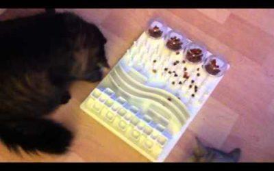 Katzenbeschäftigungstherapie