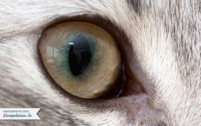MakroMontag 29/14 – Katzenauge