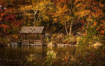 jetzt: 🍁🎃 Katalog Herbst/Winter 2017 bestellen